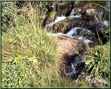 Ruisseau Impradine