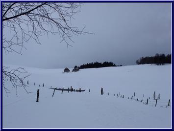 pâturages sous la neige