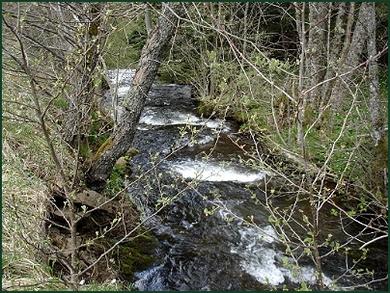 Le ruisseau des Prés Longs