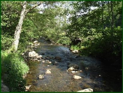Rivière à truites