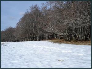 Plaques de neige