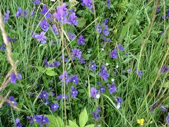 Fleurs près du lac