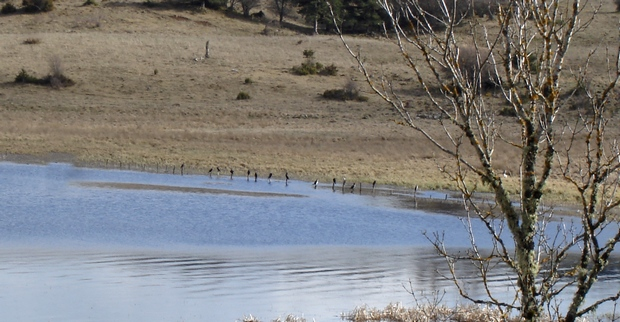 Oiseaux au lac du Pêcher